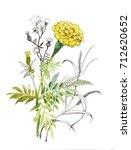 watercolor hand drawn marigolds ...   Shutterstock . vector #712620652