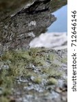 Small photo of Old man's beard (Usnea) Moss on flat rock in North Carolina Mountains