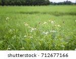 white flowers     Shutterstock . vector #712677166