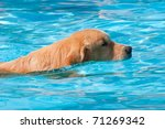 Dog Swimming. Side View