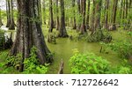 louisiana swamp filled with... | Shutterstock . vector #712726642