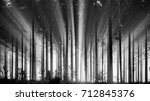 foggy spruce forest in the...
