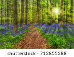 Famous Forest Hallerbos In...
