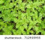 green leaf | Shutterstock . vector #712935955