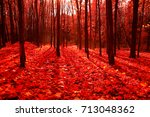 Autumn Forest Is Tinted Red