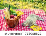 two cats lying on a blanket... | Shutterstock . vector #713068822