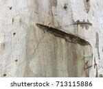 Notched Wood Bark Texture...