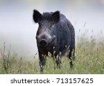 Wild Boar Walking On Meadow On...