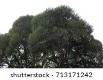 elm crown early in autumn   Shutterstock . vector #713171242