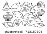 vector set of different shells... | Shutterstock .eps vector #713187805