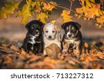 Three Little Adorable Puppies...