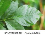 background with green leaves   Shutterstock . vector #713233288