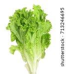 fresh lettuce isolated on white ... | Shutterstock . vector #713246695