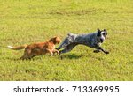 Stock photo ginger tabby cat chasing a young dog in high speed with green grass background 713369995