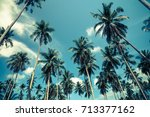 beautiful coconut palm trees... | Shutterstock . vector #713377162