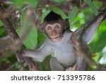 cute monkeys a cute monkey... | Shutterstock . vector #713395786