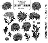 Set Of Isolated Chrysanthemum...