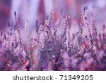 Heather Impression. Moorland A...