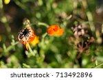 calendula seeds and flowers