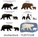 collection of different species ... | Shutterstock .eps vector #713572108
