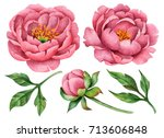 set of watercolor peonies and... | Shutterstock . vector #713606848