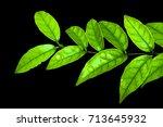leaves on black background.   Shutterstock . vector #713645932