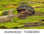 Small photo of Midland Painted Turtle resting on a log in the pond, basking in the sun. Don Valley Brickworks Park, Toronto, Ontario, Canada.