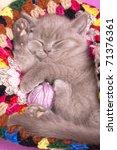 Stock photo sleeping kitten 71376361