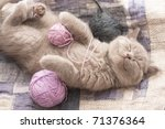 Stock photo sleeping kitten rare color lilac 71376364