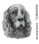 irish red setter dog pen ink | Shutterstock . vector #713840506