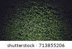 green leaf abstract grim and... | Shutterstock . vector #713855206