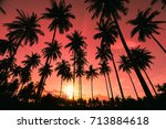 silhouette coconut palm trees... | Shutterstock . vector #713884618