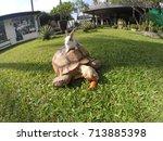 Stock photo rabbit turtle 713885398