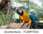 colorful amazon parrot stand on ...   Shutterstock . vector #713897032