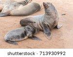 a cape fur seal pup ... | Shutterstock . vector #713930992
