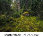 In The Deep Forest. The...