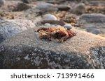 Small photo of aglae on beach rock
