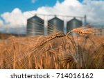 Farm  Wheat Field With Grain...