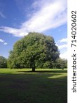 Small photo of Holm Oak tree in Greenwich Park