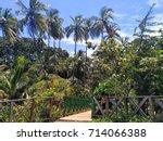 Beautiful Coconut Palm Trees...