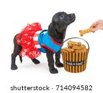 Stock photo puppy trick or treating for biscuits 714094582