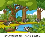 forest scene with many raccoons ... | Shutterstock .eps vector #714111352