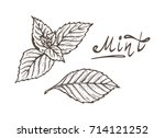 herbs and spices. mint leaves... | Shutterstock .eps vector #714121252