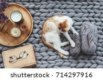 Stock photo ginger kitten relaxing on knitted woolen chunky blanket book and wooden tray with home decor on 714297916