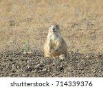 Prairie Dog At Badlands...