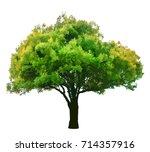 green tree isolated on white... | Shutterstock .eps vector #714357916