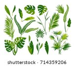 vector collection of exotic... | Shutterstock .eps vector #714359206