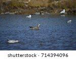 the sea bird | Shutterstock . vector #714394096