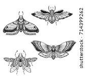 beetle bug tattoo drawing set.... | Shutterstock .eps vector #714399262