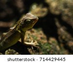 lizard on sun light. | Shutterstock . vector #714429445